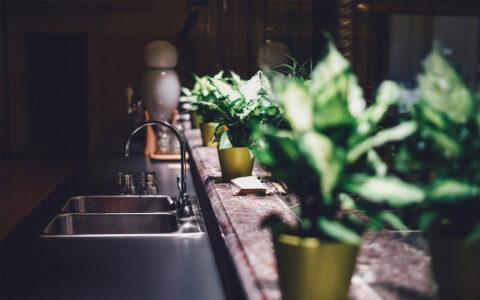 Jakie kwiaty nadają się do kuchni